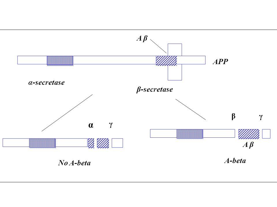 A β β-secretase A-beta APP β No A-beta α γ α-secretase A β γ