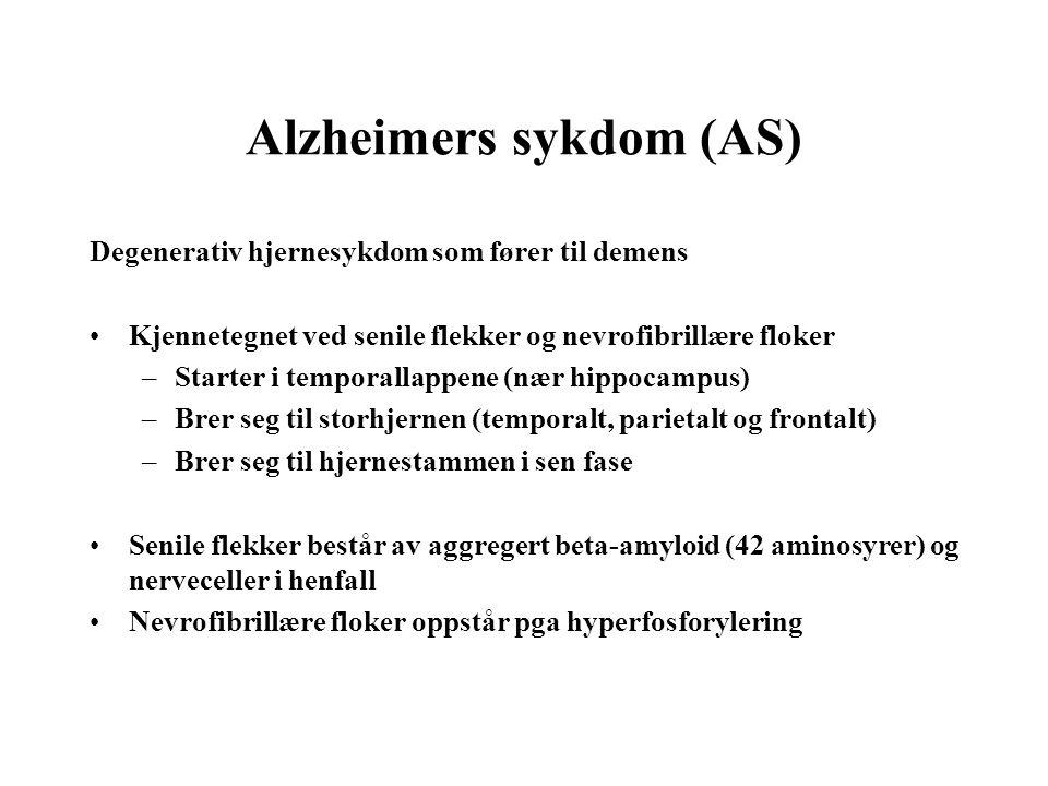 Alzheimers sykdom (AS) Degenerativ hjernesykdom som fører til demens Kjennetegnet ved senile flekker og nevrofibrillære floker –Starter i temporallapp
