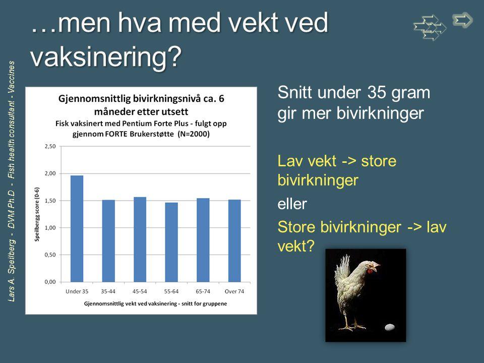 Lars A. Speilberg - DVM Ph.D - Fish health consultant - Vaccines Snitt under 35 gram gir mer bivirkninger Lav vekt -> store bivirkninger eller Store b