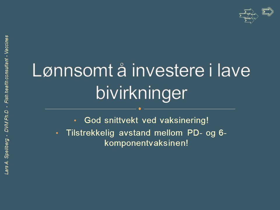 Lars A. Speilberg - DVM Ph.D - Fish health consultant - Vaccines God snittvekt ved vaksinering! Tilstrekkelig avstand mellom PD- og 6- komponentvaksin