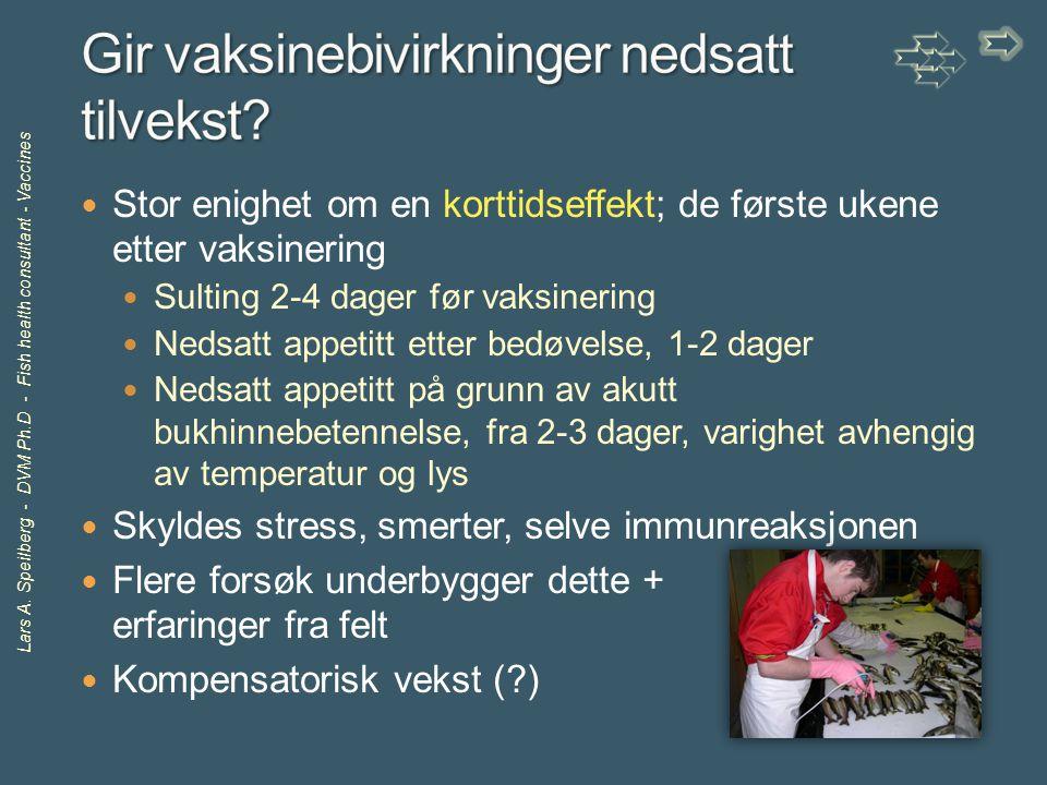 Lars A. Speilberg - DVM Ph.D - Fish health consultant - Vaccines Stor enighet om en korttidseffekt; de første ukene etter vaksinering Sulting 2-4 dage