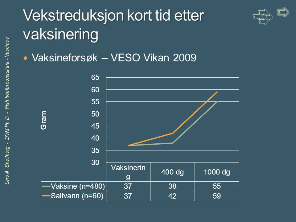 Lars A. Speilberg - DVM Ph.D - Fish health consultant - Vaccines Vaksineforsøk – VESO Vikan 2009