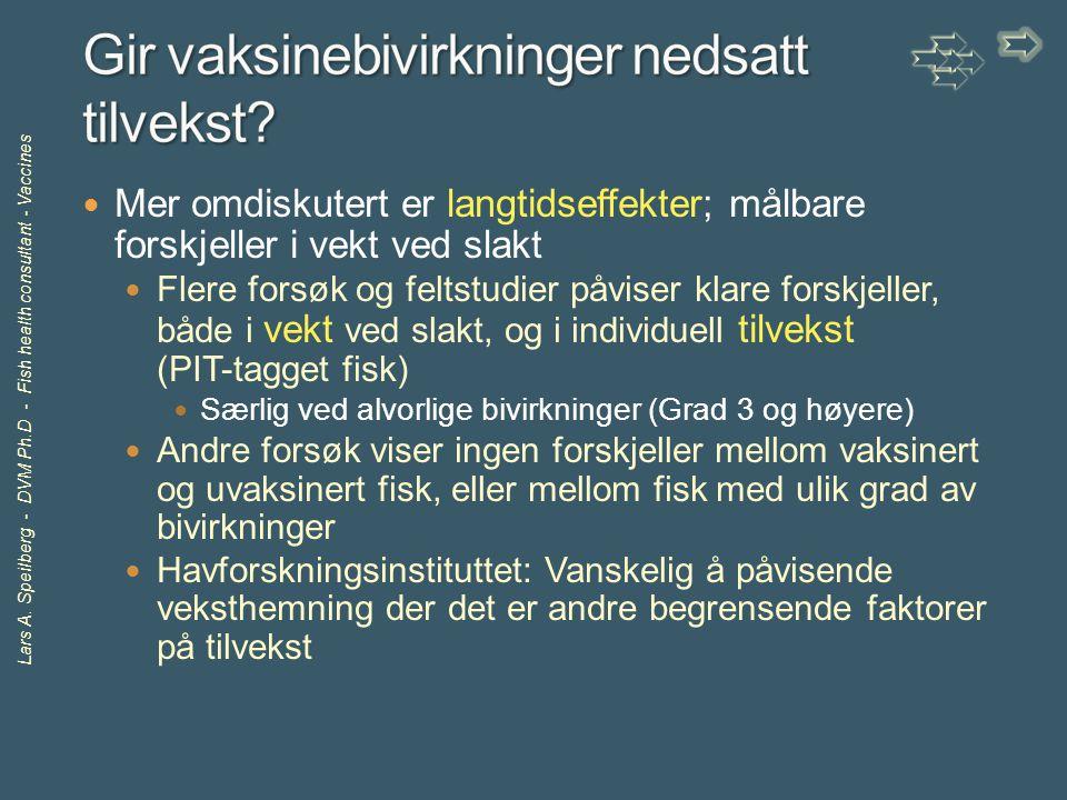 Lars A. Speilberg - DVM Ph.D - Fish health consultant - Vaccines Mer omdiskutert er langtidseffekter; målbare forskjeller i vekt ved slakt Flere forsø