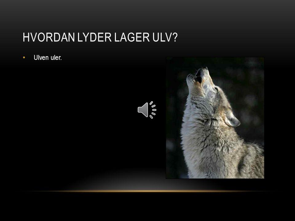 Ulven uler. HVORDAN LYDER LAGER ULV?