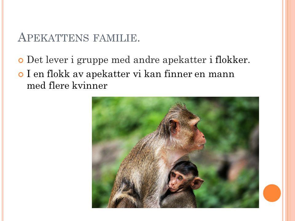 H VORDAN APEKATTET SER UT ? Det er forskjellig slags apekatter. De ser ut som et menneske. De har store ører. De har pels på seg. De har forskjellig f