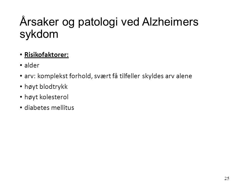 Årsaker og patologi ved Alzheimers sykdom 24 Alzheimer hjerne Normal hjerne