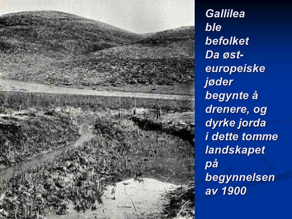 Gallileablebefolket Da øst- europeiskejøder begynte å drenere, og dyrke jorda i dette tomme landskapetpåbegynnelsen av 1900