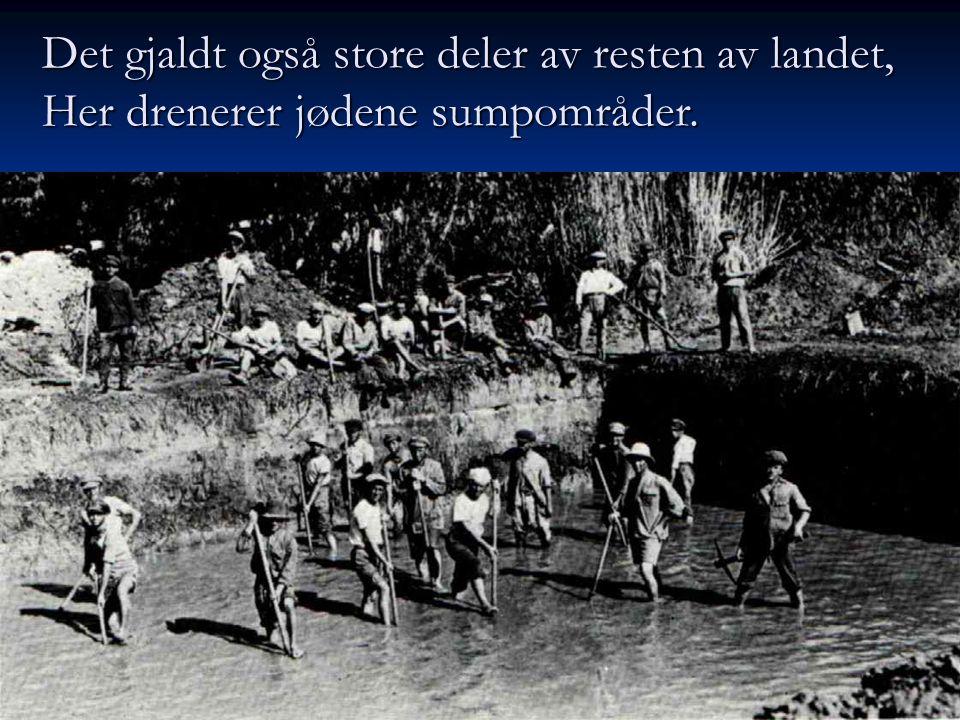 Det gjaldt også store deler av resten av landet, Her drenerer jødene sumpområder.