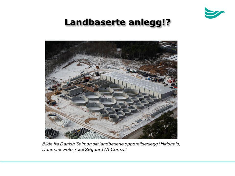 Bilde fra Danish Salmon sitt landbaserte oppdrettsanlegg i Hirtshals, Danmark.