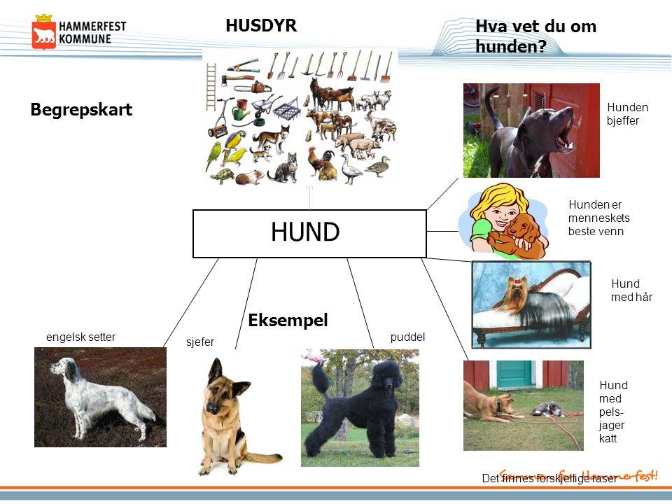 Hva vet du om hunden? Eksempel Begrepskart HUND HUSDYR engelsk setter sjefer puddel Hunden bjeffer Hunden er menneskets beste venn Hund med hår Hund m