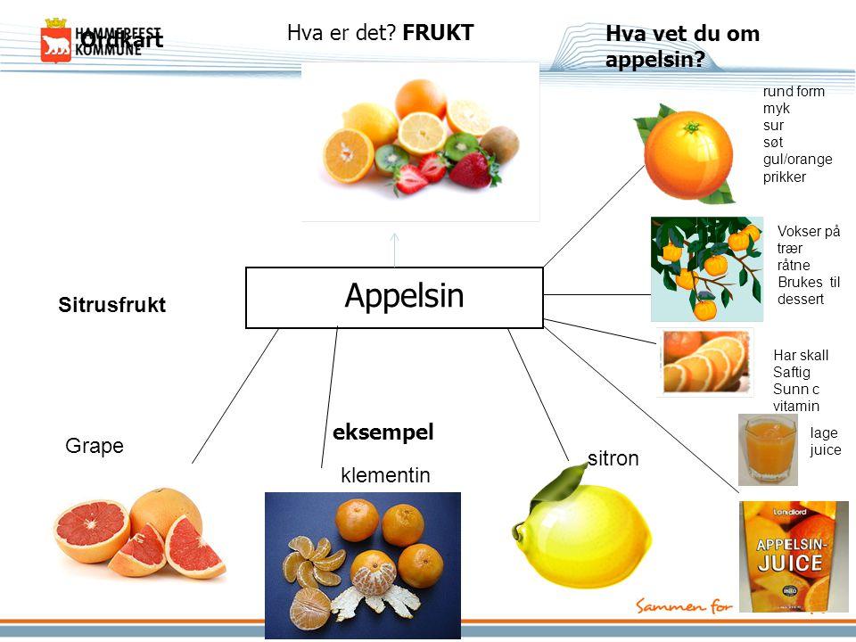 Hva vet du om appelsin? eksempel Ordkart Appelsin Hva er det? FRUKT rund form myk sur søt gul/orange prikker Vokser på trær råtne Brukes til dessert l