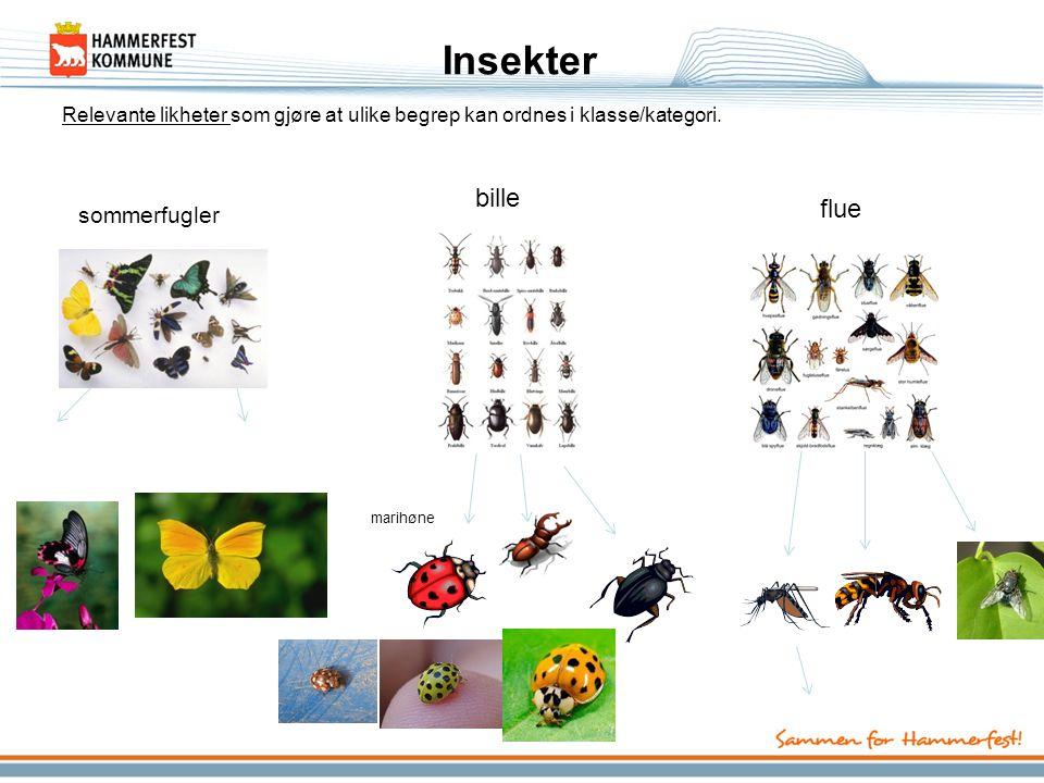 Insekter sommerfugler bille flue Relevante likheter som gjøre at ulike begrep kan ordnes i klasse/kategori. marihøne