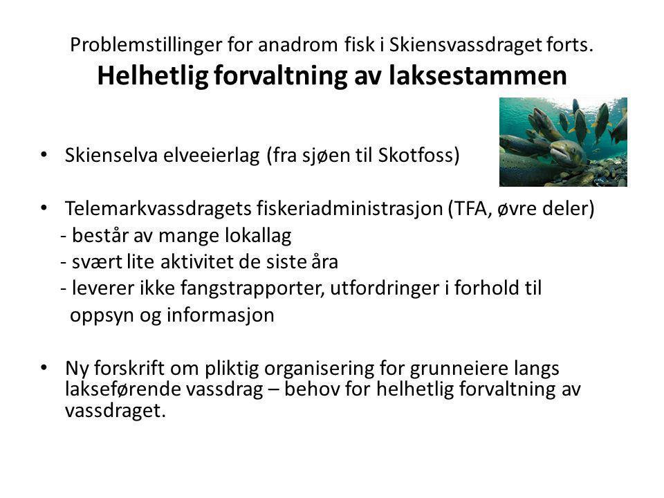 Problemstillinger for anadrom fisk i Skiensvassdraget forts. Helhetlig forvaltning av laksestammen Skienselva elveeierlag (fra sjøen til Skotfoss) Tel