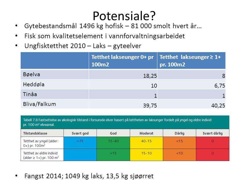 Potensiale? Gytebestandsmål 1496 kg hofisk – 81 000 smolt hvert år… Fisk som kvalitetselement i vannforvaltningsarbeidet Ungfisktetthet 2010 – Laks –