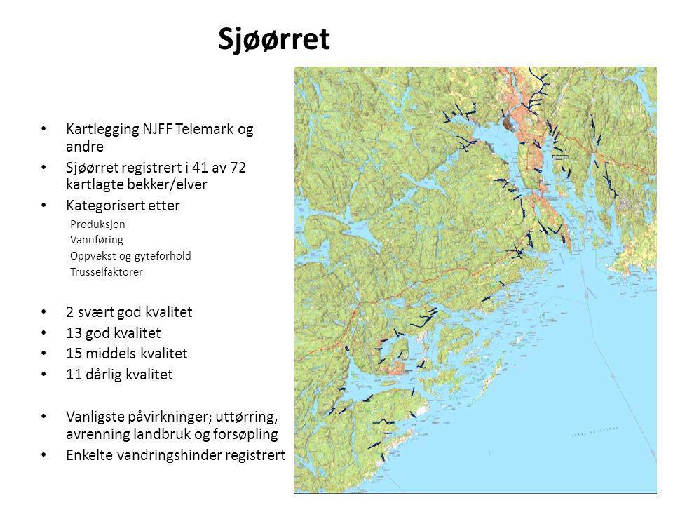 Sjøørret Kartlegging NJFF Telemark og andre Sjøørret registrert i 41 av 72 kartlagte bekker/elver Kategorisert etter Produksjon Vannføring Oppvekst og