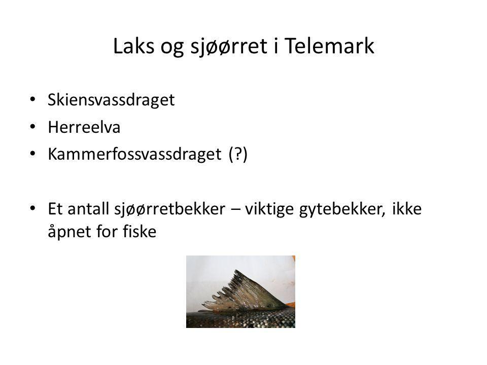 Skiensvassdraget Langstrakt vassdrag med store innsjøer 120-150 km anadrom strekning Anadrom fisk vandrer til: Omnesfossen i Heddøla Tinfos kraftverk i Tinåa Oterholtfossen(?) i Bøelva Røyevannet (Svartufs) i Falkumelva/Bliva Ulefoss i Eidselva Lokal fiskeforskrift; følger strenge reguleringer for fiske i anadrome vassdrag men likevel godt tilrettelagt for fiske etter innlandsfisk gjennom utvida fiskesesong for innlandsfiske (1 januar – 30 sept.) og ved at Nordsjø og Heddalsvann er definert som innlandsvassdrag i fiskeforskriften.