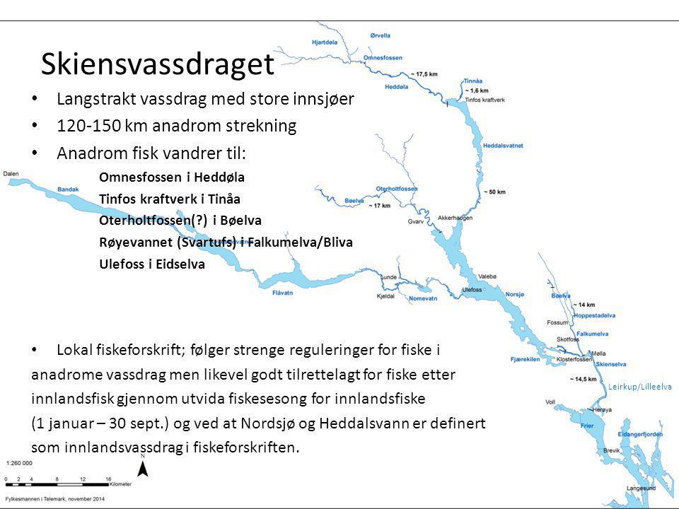 Skiensvassdraget Langstrakt vassdrag med store innsjøer 120-150 km anadrom strekning Anadrom fisk vandrer til: Omnesfossen i Heddøla Tinfos kraftverk