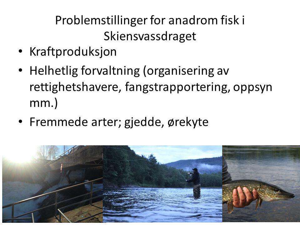 Problemstillinger for anadrom fisk i Skiensvassdraget Kraftproduksjon Helhetlig forvaltning (organisering av rettighetshavere, fangstrapportering, opp