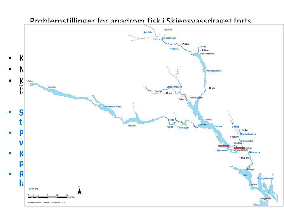 Problemstillinger for anadrom fisk i Skiensvassdraget forts. Kraftproduksjon Klosterfoss og Skotfoss; Akershus energi Mølla (Eidet 1 og 2); Flere eier