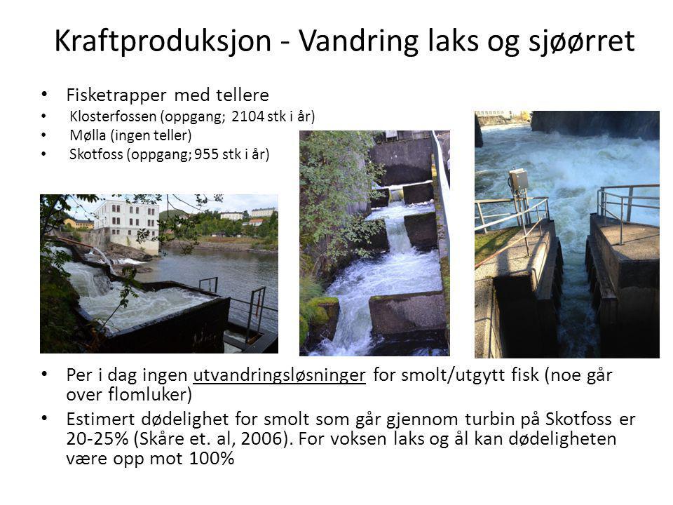 Kraftproduksjon - Vandring laks og sjøørret Fisketrapper med tellere Klosterfossen (oppgang; 2104 stk i år) Mølla (ingen teller) Skotfoss (oppgang; 95