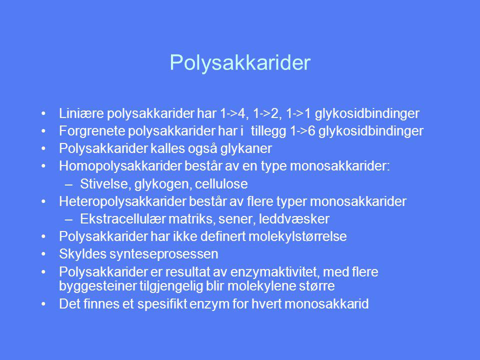 Polysakkarider Liniære polysakkarider har 1 - >4, 1 - >2, 1 - >1 glykosidbindinger Forgrenete polysakkarider har i tillegg 1 - >6 glykosidbindinger Polysakkarider kalles også glykaner Homopolysakkarider består av en type monosakkarider: –Stivelse, glykogen, cellulose Heteropolysakkarider består av flere typer monosakkarider –Ekstracellulær matriks, sener, leddvæsker Polysakkarider har ikke definert molekylstørrelse Skyldes synteseprosessen Polysakkarider er resultat av enzymaktivitet, med flere byggesteiner tilgjengelig blir molekylene større Det finnes et spesifikt enzym for hvert monosakkarid