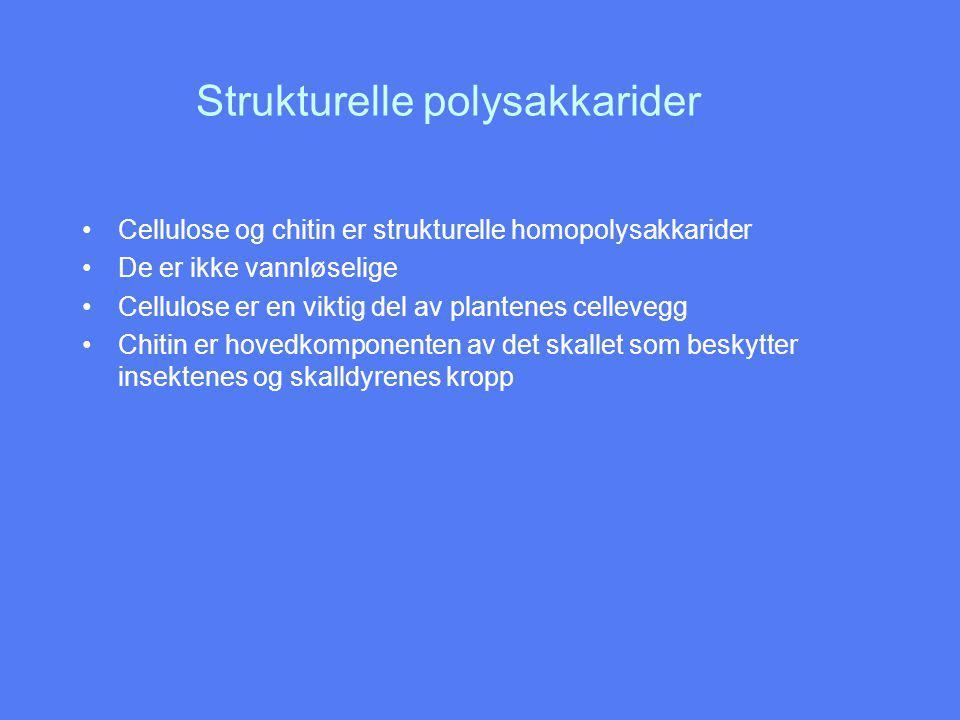 Strukturelle polysakkarider Cellulose og chitin er strukturelle homopolysakkarider De er ikke vannløselige Cellulose er en viktig del av plantenes cellevegg Chitin er hovedkomponenten av det skallet som beskytter insektenes og skalldyrenes kropp