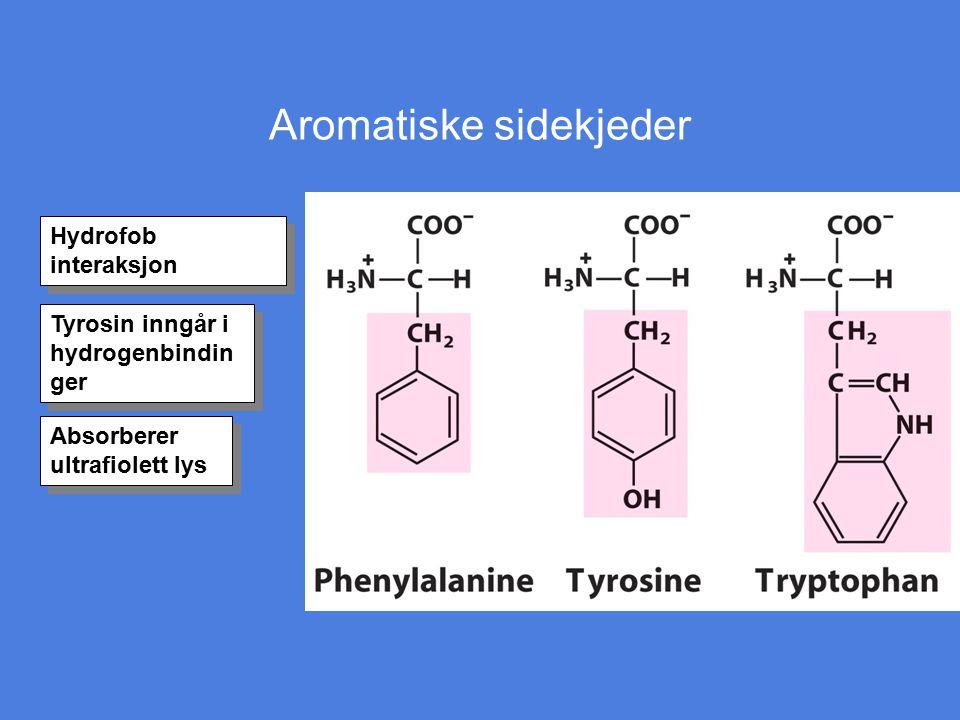 Aromatiske sidekjeder Hydrofob interaksjon Tyrosin inngår i hydrogenbindin ger Absorberer ultrafiolett lys