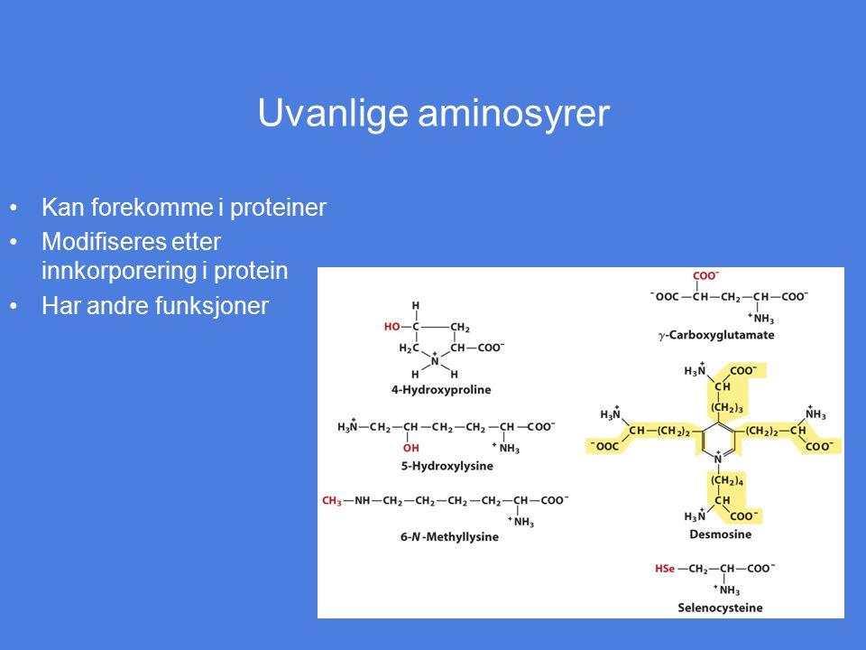 Uvanlige aminosyrer Kan forekomme i proteiner Modifiseres etter innkorporering i protein Har andre funksjoner