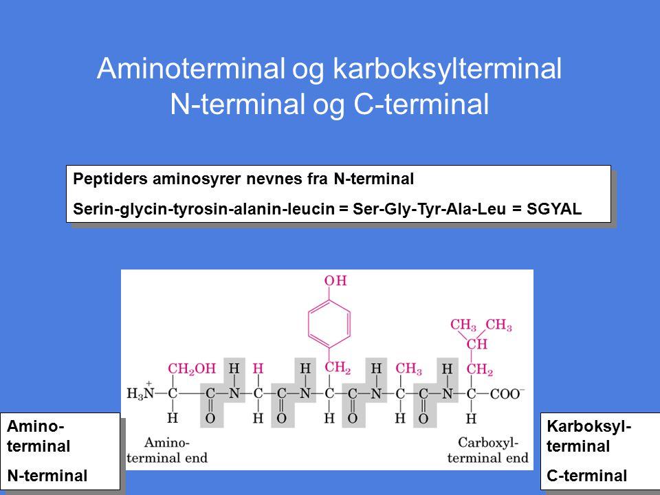 Aminoterminal og karboksylterminal N-terminal og C-terminal Peptiders aminosyrer nevnes fra N-terminal Serin-glycin-tyrosin-alanin-leucin = Ser-Gly-Ty