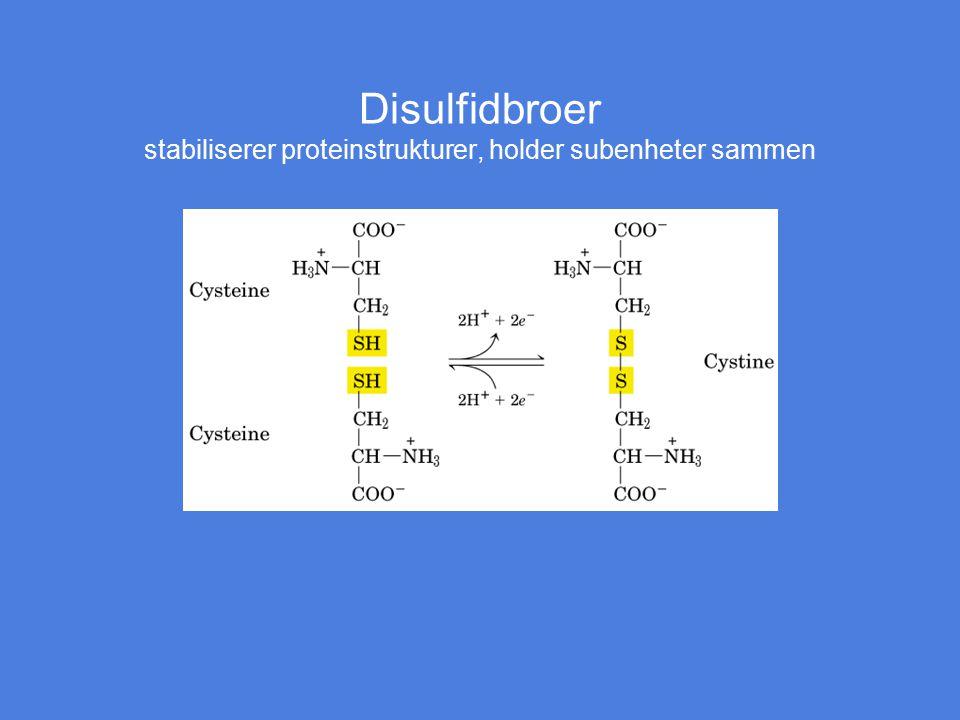 Disulfidbroer stabiliserer proteinstrukturer, holder subenheter sammen Figur 5-7