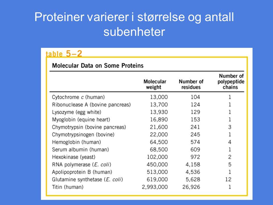 Proteiner varierer i størrelse og antall subenheter Tablee 5-2