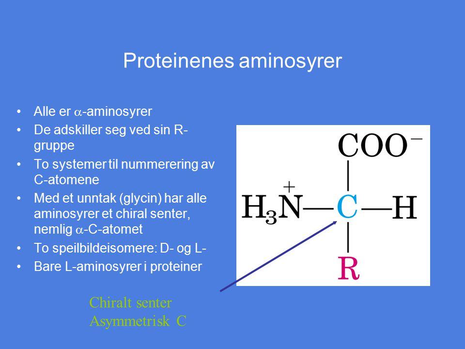 Proteinenes aminosyrer Alle er  -aminosyrer De adskiller seg ved sin R- gruppe To systemer til nummerering av C-atomene Med et unntak (glycin) har al