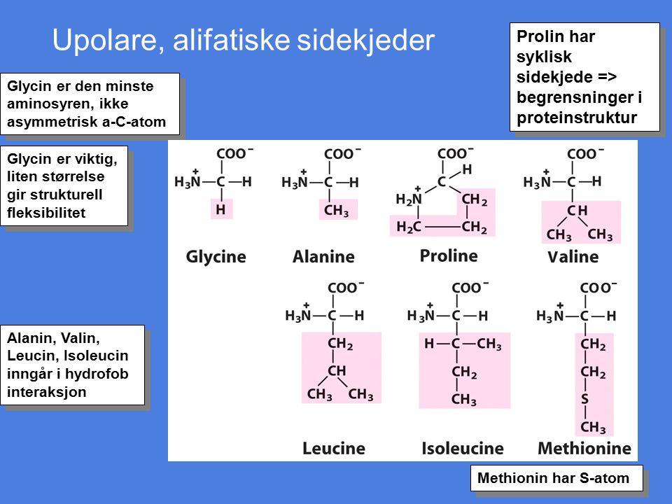Upolare, alifatiske sidekjeder Glycin er den minste aminosyren, ikke asymmetrisk a-C-atom Alanin, Valin, Leucin, Isoleucin inngår i hydrofob interaksj