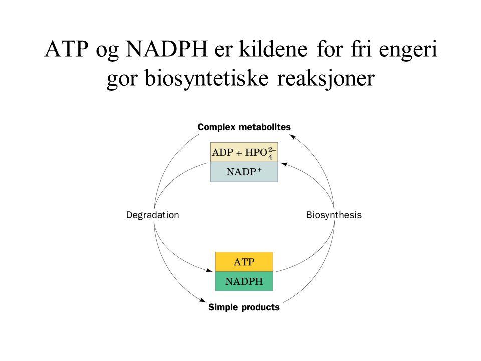 Generell prosedyre til bestemmelse av uorganisk fosfat Til 1 ml av en fosfatholdig løsning tilsettes 1,3 ml reagens A.