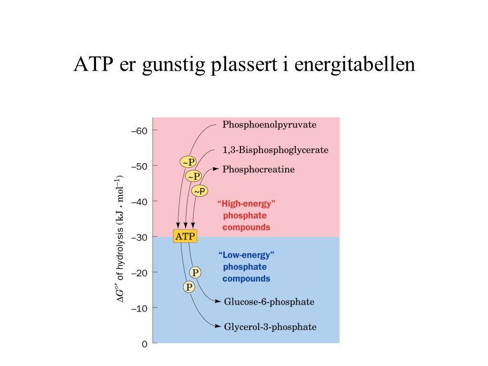 ATP er gunstig plassert i energitabellen