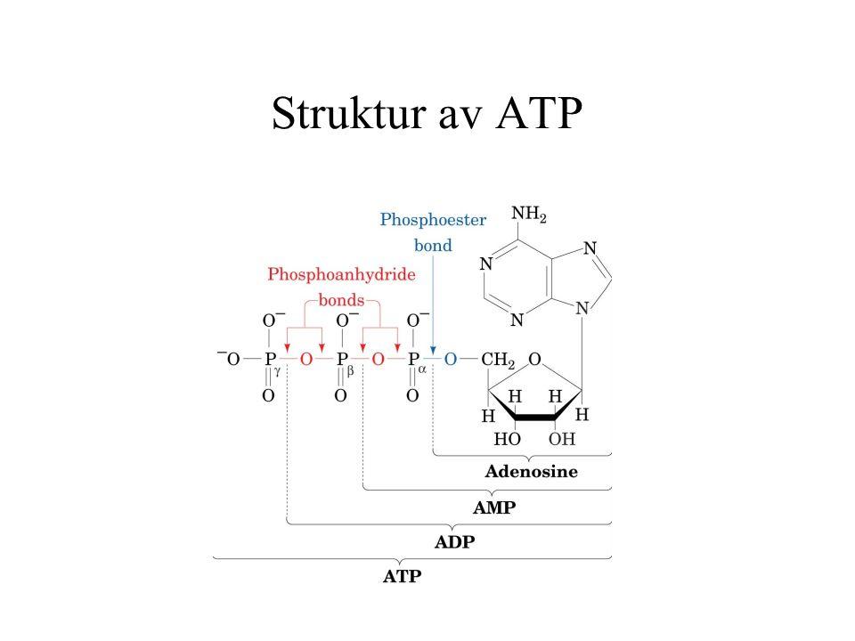 Regneoppgave Aktiveringsenergien for en gitt enzymatisk katalysert reaksjon er 25200 J/mol.