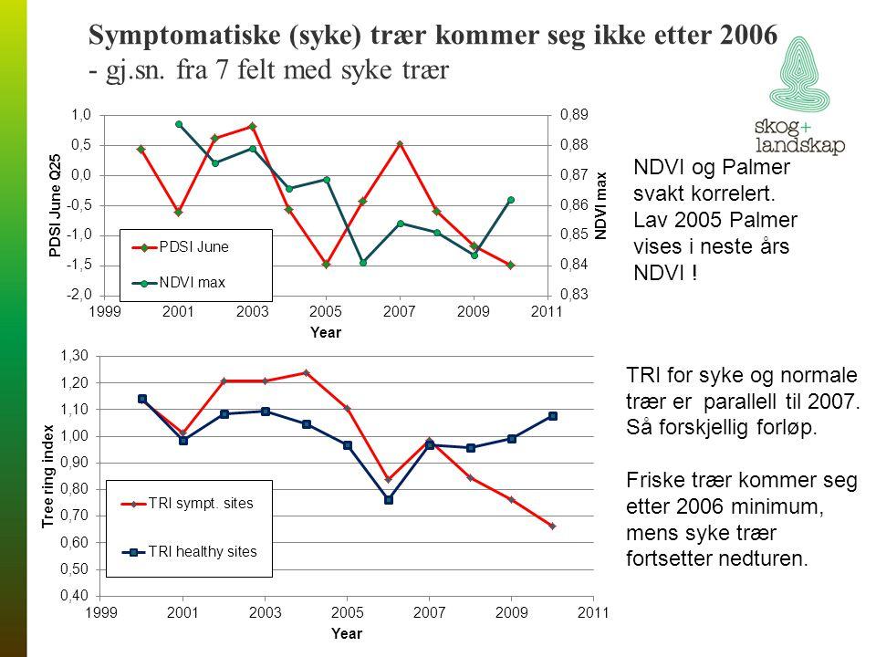 Symptomatiske (syke) trær kommer seg ikke etter 2006 - gj.sn. fra 7 felt med syke trær NDVI og Palmer svakt korrelert. Lav 2005 Palmer vises i neste å