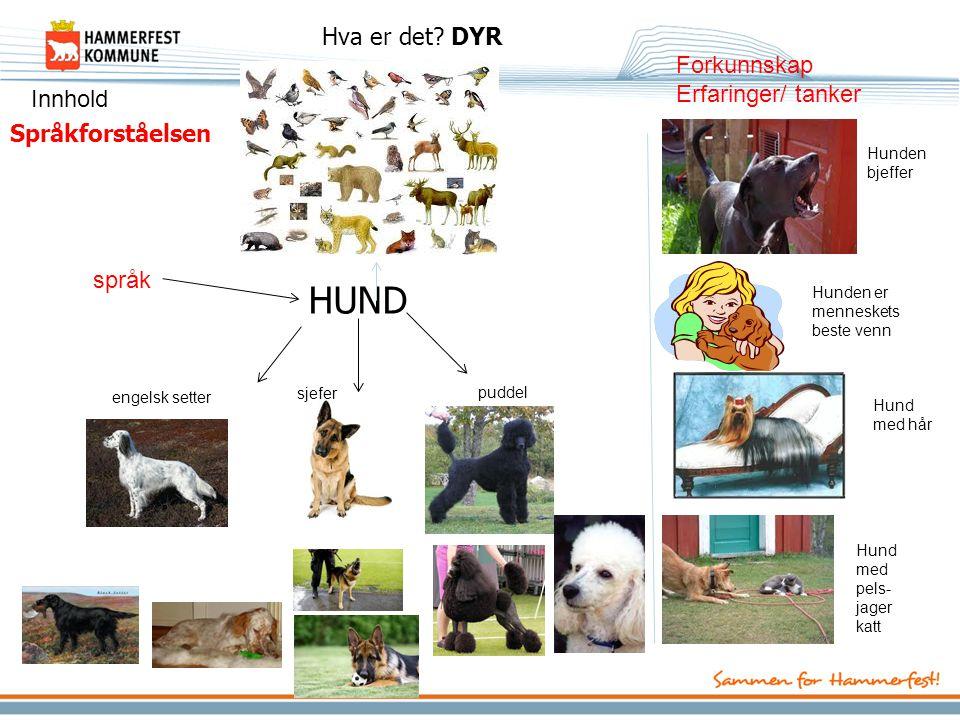 Språkforståelsen HUND Hva er det? DYR engelsk setter sjefer puddel Hunden bjeffer Hunden er menneskets beste venn Hund med hår Hund med pels- jager ka