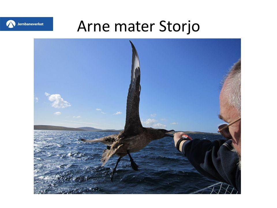 Arne mater Storjo