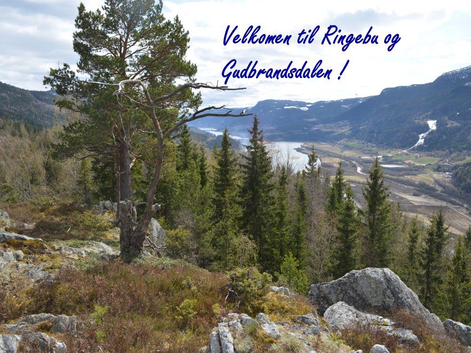 Velkomen til Ringebu og Gudbrandsdalen !