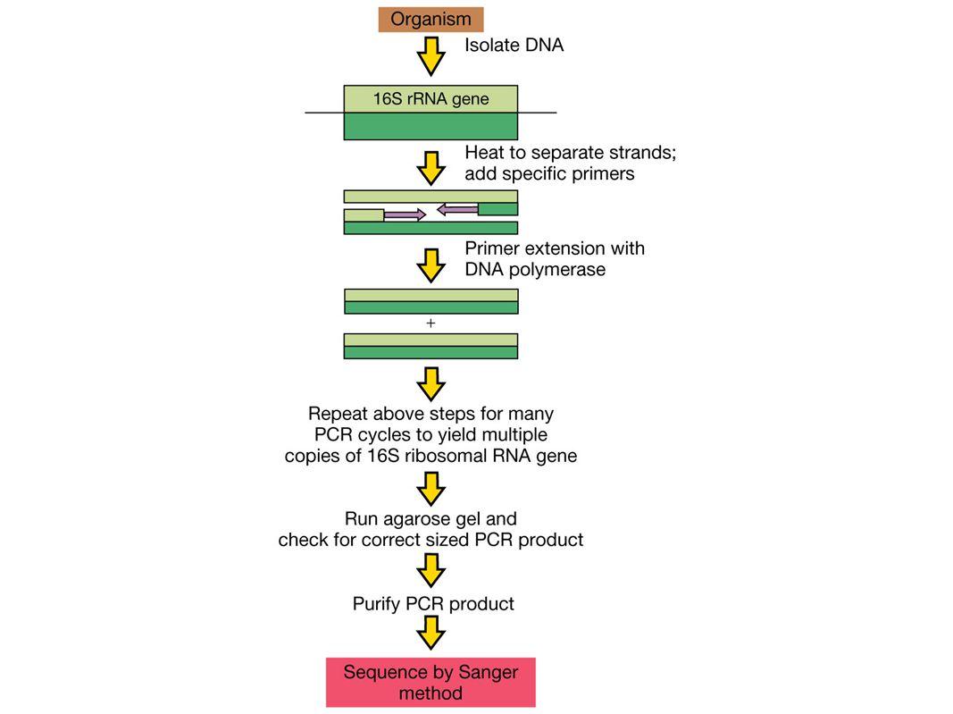FAME (fatty acid methyl ester analysis)