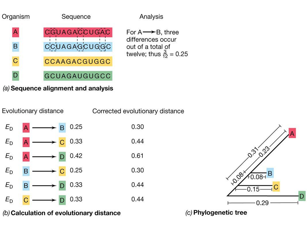 Signatursekvenser i 16S (18S) rRNA: Posisjon 910: AAACYCAAA(bakterier) AAACYYAAAG(archaea og eukaryote) Posisjon 1400: YACACACCG(bakterier og eukaryote) CACACACCG(archaea)
