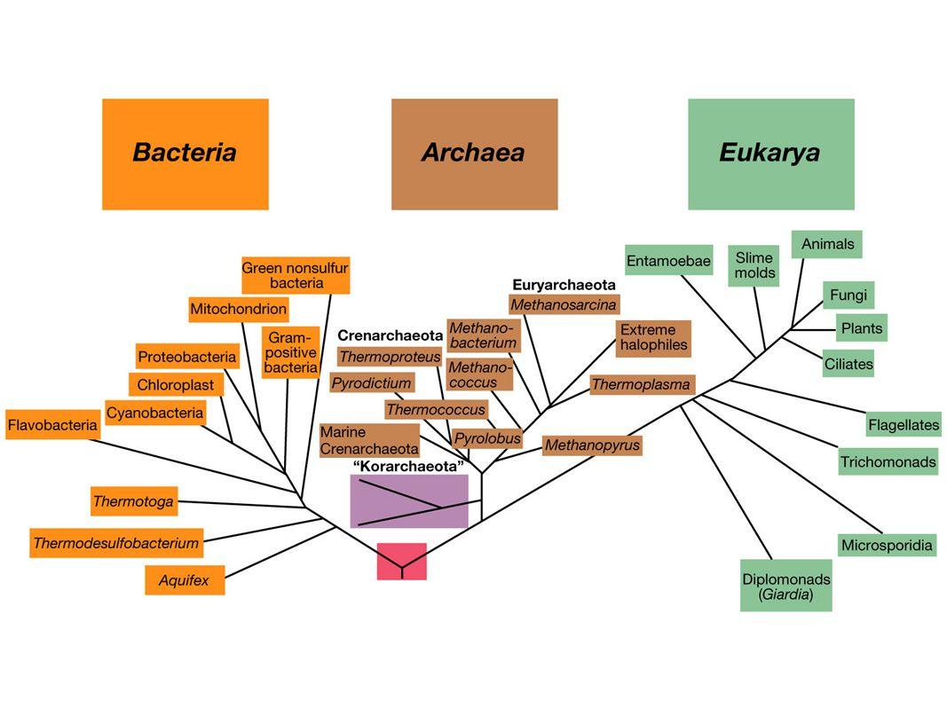 TaksonomiskEksempel: inndeling: Domenebakterier Fylum VII proteobakterier, seksjon XIX  -proteobakterier Klasse I Zymobakterier Orden X Vibrionales Familie I Vibrionaceae Slekt (genus)Vibrio Artcholerae
