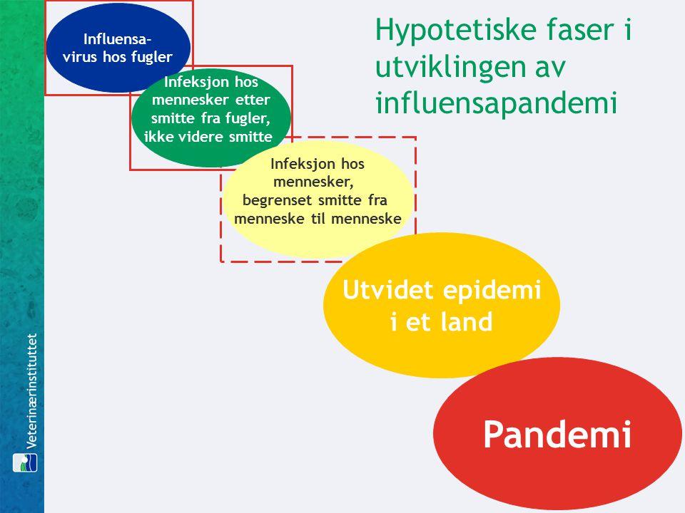 Hypotetiske faser i utviklingen av influensapandemi Influensa- virus hos fugler Infeksjon hos mennesker etter smitte fra fugler, ikke videre smitte Infeksjon hos mennesker, begrenset smitte fra menneske til menneske Utvidet epidemi i et land Pandemi