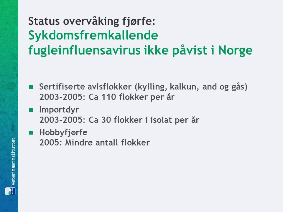 Status overvåking fjørfe: Sykdomsfremkallende fugleinfluensavirus ikke påvist i Norge Sertifiserte avlsflokker (kylling, kalkun, and og gås) 2003-2005: Ca 110 flokker per år Importdyr 2003-2005: Ca 30 flokker i isolat per år Hobbyfjørfe 2005: Mindre antall flokker