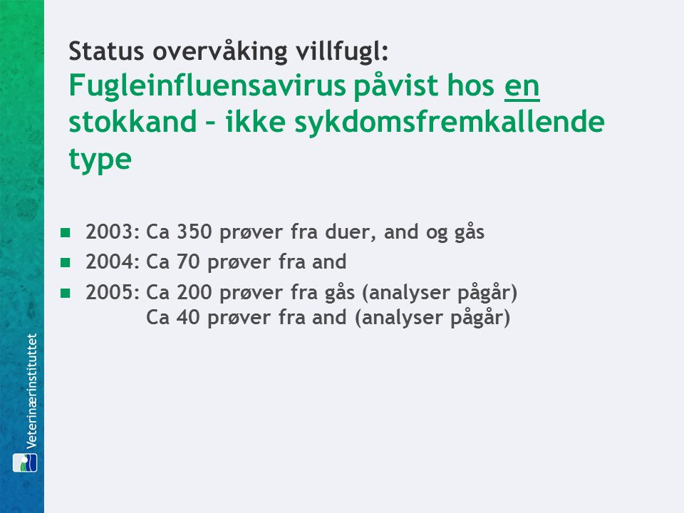 Status overvåking villfugl: Fugleinfluensavirus påvist hos en stokkand – ikke sykdomsfremkallende type 2003:Ca 350 prøver fra duer, and og gås 2004:Ca 70 prøver fra and 2005:Ca 200 prøver fra gås (analyser pågår) Ca 40 prøver fra and (analyser pågår)