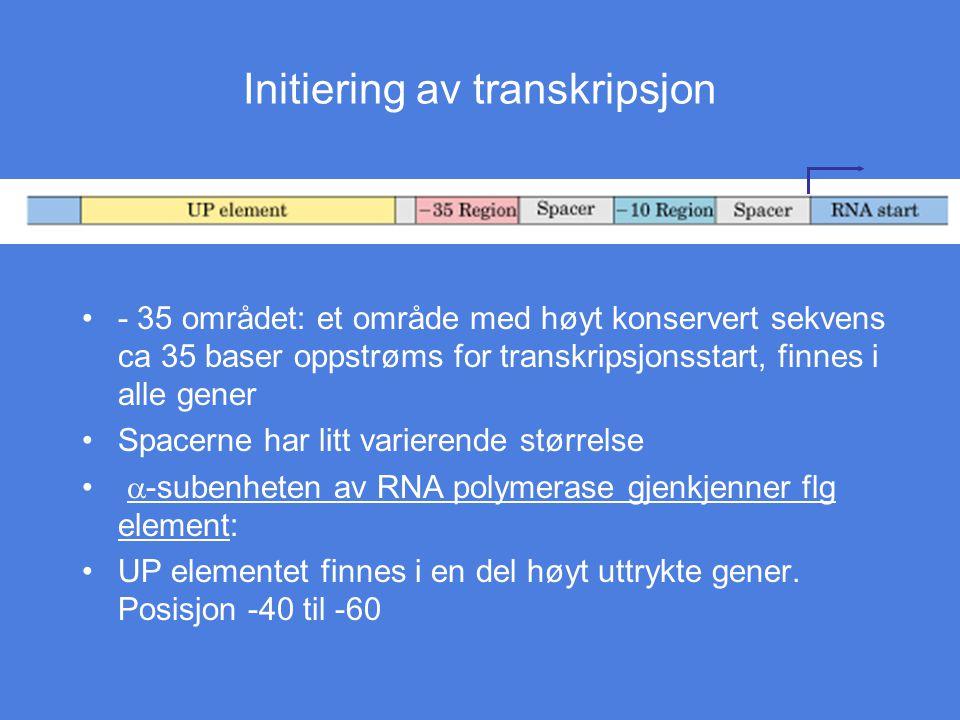 Initiering av transkripsjon - 35 området: et område med høyt konservert sekvens ca 35 baser oppstrøms for transkripsjonsstart, finnes i alle gener Spa
