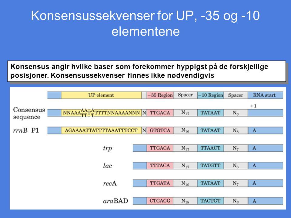 Konsensussekvenser for UP, -35 og -10 elementene Konsensus angir hvilke baser som forekommer hyppigst på de forskjellige posisjoner. Konsensussekvense