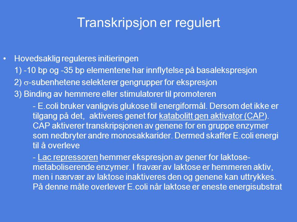 Transkripsjon er regulert Hovedsaklig reguleres initieringen 1) -10 bp og -35 bp elementene har innflytelse på basalekspresjon 2)  -subenhetene selek