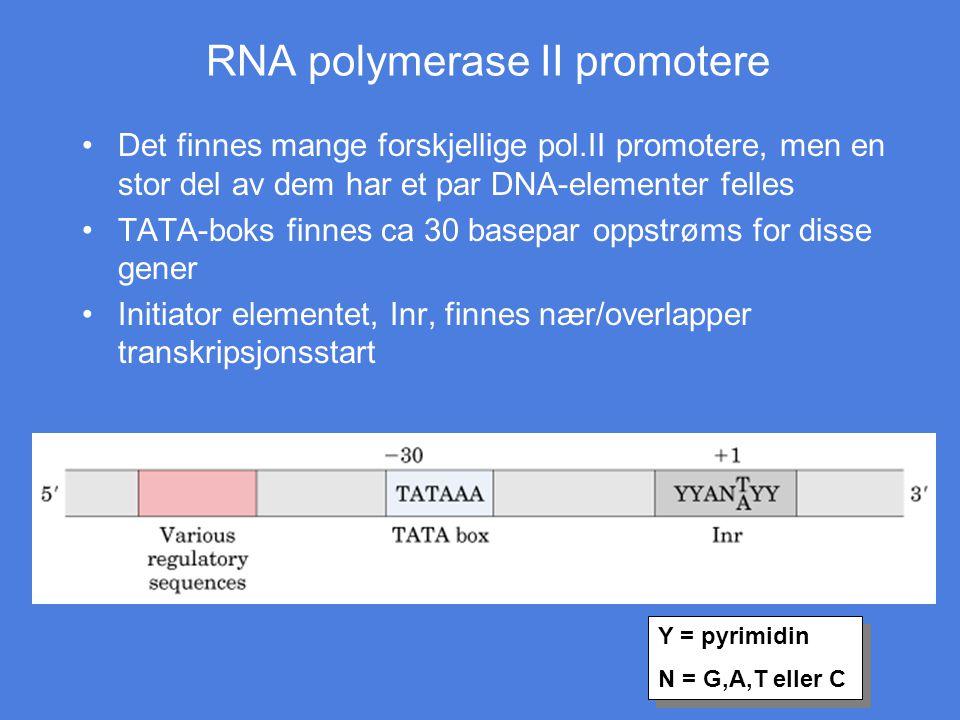 RNA polymerase II promotere Det finnes mange forskjellige pol.II promotere, men en stor del av dem har et par DNA-elementer felles TATA-boks finnes ca